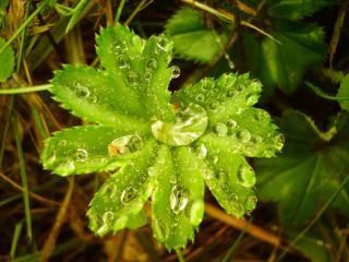 обои Зеленый листок с краплями воды фото