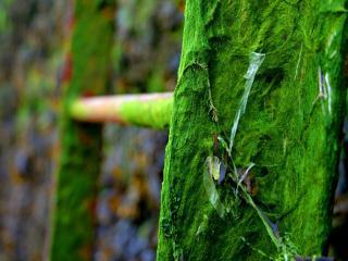 обои Зеленый мох с паутиной на садовой лестнице фото
