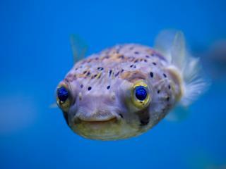 обои Странная рыбка фото