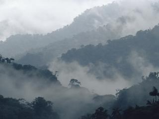 обои Тропические холмы в тумане фото