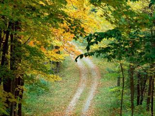 обои Горная дорога в лесу фото
