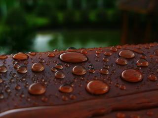 обои Капельки после дождя фото