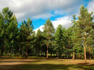 обои Зеленый лес на равнине фото