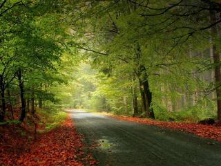 обои Листва опавшая и деревья у дороги фото
