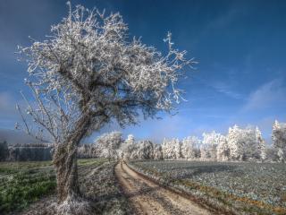 обои На деревьях изморозь фото