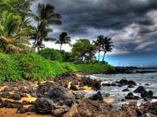 обои Темнеет небо над пальмовым побережьем фото
