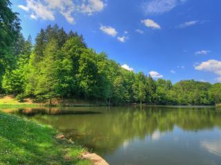 обои Весеннее пробуждение природы у пруда фото