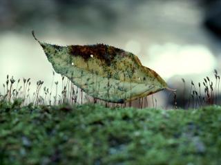 обои Старый лист среди маленьких ростков фото