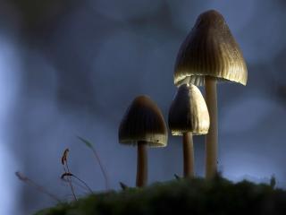 обои Три грибочка в тени фото