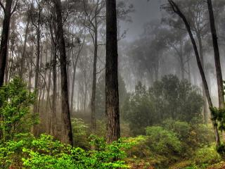 обои Туманный лес фото