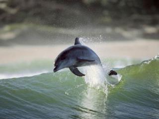 обои Весёлый маленький дельфин фото