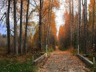 обои Дорога через осенний лес фото
