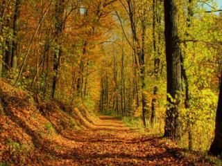 обои Дорога через Осень фото