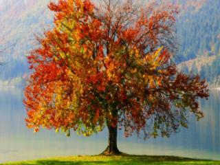 обои Разноцветное дерево Осень фото