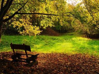 обои Скамейка под осенним деревом фото