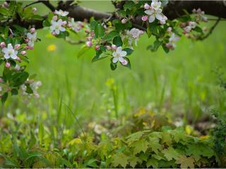 обои Ажурная весна фото
