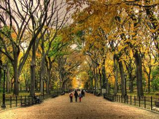 обои Старый осенний парк фото