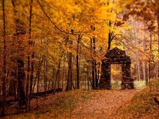 обои Вход в золотую осень фото