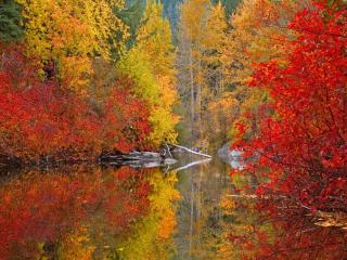 обои Осеннее кружево фото
