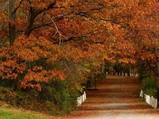 обои У дороги дуб осенний фото