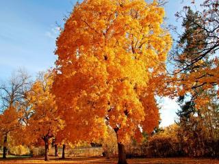 обои Яркое золото осени фото
