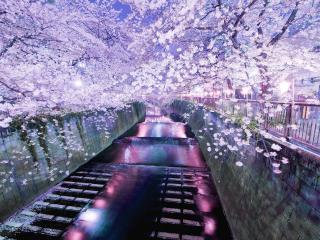 обои Белый цвет весны у канала фото