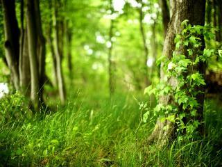 обои Молодая зелень травы и листьев на солнышке фото