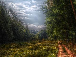 обои Над лесом сгущаются тучи фото
