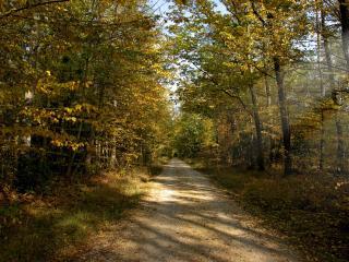 обои Грунтовая дорога в молодом лесу фото