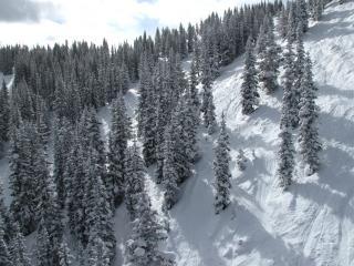 обои Зимние склоны с деревьями фото