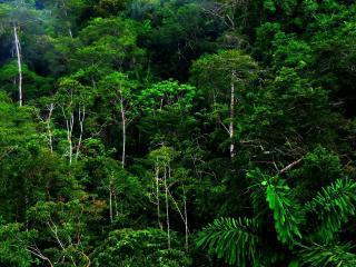 обои Зеленый тропический лес фото
