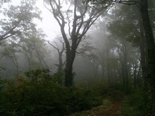 обои Под вечер в лесу туман фото