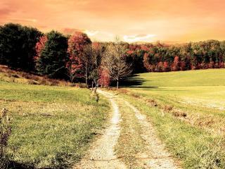 обои Сельская дорога ведущая к перелеску фото