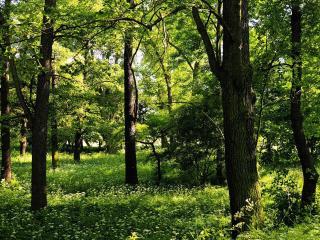 обои Цветущие травы в парке фото