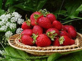 обои Лучшей ягодой на свете я клубнику назову фото