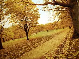 обои Аллеи в осеннем парке фото