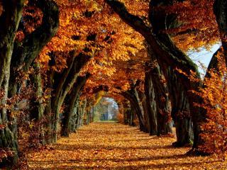 обои Аллея под аркой крон деревьев осенних фото