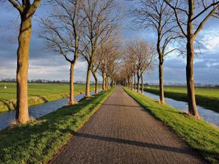 обои Деревья и каналы у аллеи фото
