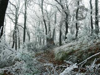 обои Деревья и трава в изморози фото