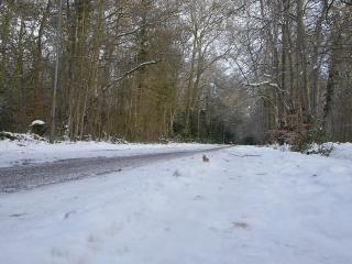 обои Зима на дорогах фото