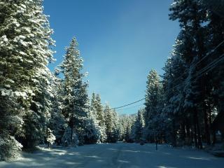 обои Зимняя дорога в еловом лесу фото