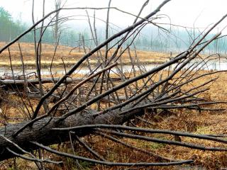обои Поваленные деревья после стихии фото