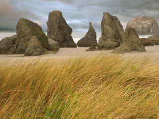 обои Скалы на песке и трава фото