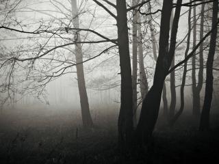 обои Утренний туман фото