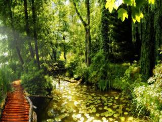 обои Деревянный мостик у маленького пруда, лето фото