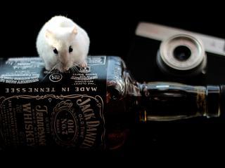 обои Белая мышка на бутылке фото