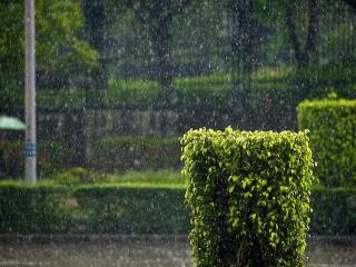 обои Дождь на аллеях фото