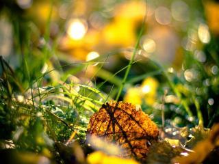 обои Жёлтый лист в зелёной травке фото