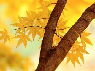 обои Веточка с желтой листвой фото