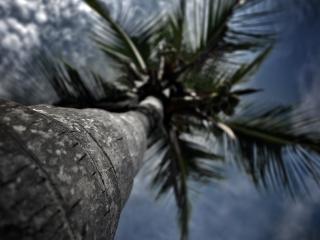 обои Вид пальмы снизу фото
